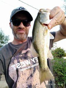 Largemouth Bass — Laurent PERRI