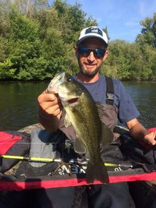 Largemouth Bass — Cedric Charpentier