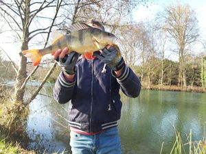 European Perch — multifishing