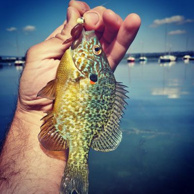 Mickael Fishing