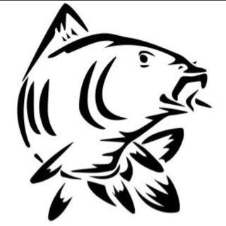 elian_carp_fishing TV