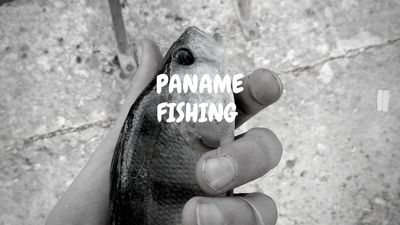 Paname Fishing