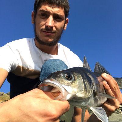 gxlabraxfishing 🐟🎣