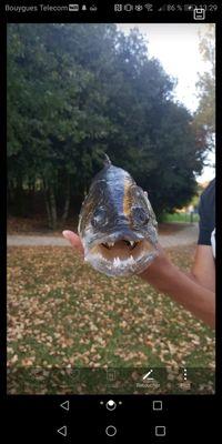 Fish Andfun