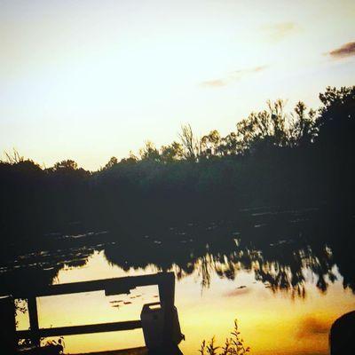 fishing carp