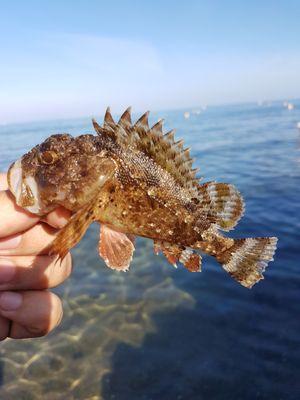 Ben Benito Rockfishing