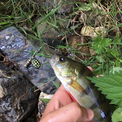 Lubin le pescaire