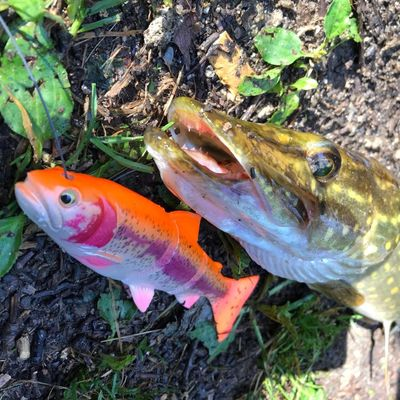 Thisma fishing