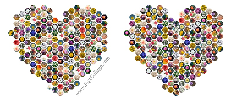 Heart Collage options