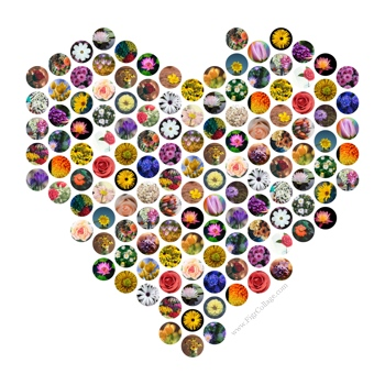 Heart shape collage made using a grid of circles