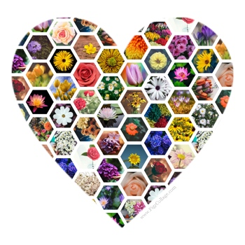 Heart shape collage made using a grid of hexagons and masked using the heart shape