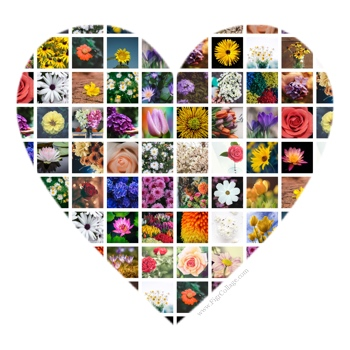 Heart shape photo grid collage with pictures masked using the heart shape