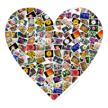Heart photo pile collage with pictures masked using the heart shape