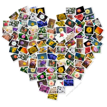 Heart photo pile collage