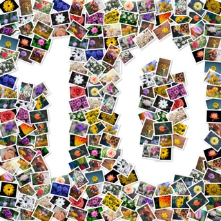 Number 10 collage