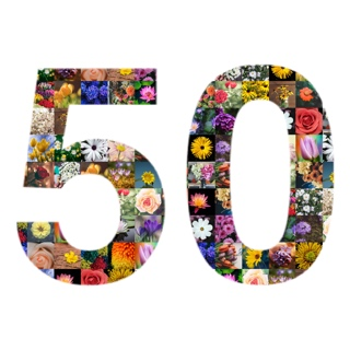 Number 50 collage