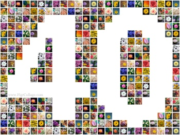 Number 40 photo grid collage with pictures placed outside the number