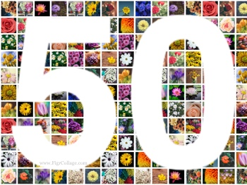 Number 50 photo grid collage with pictures placed outside the number as well as masked using the number