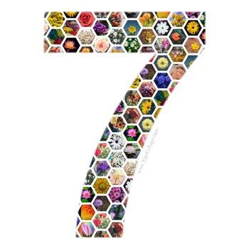 Number 7 collage made using a grid of hexagons and masked using the number