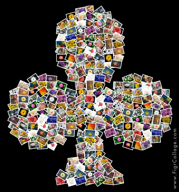 Photo collage of playing cards Clubs shape