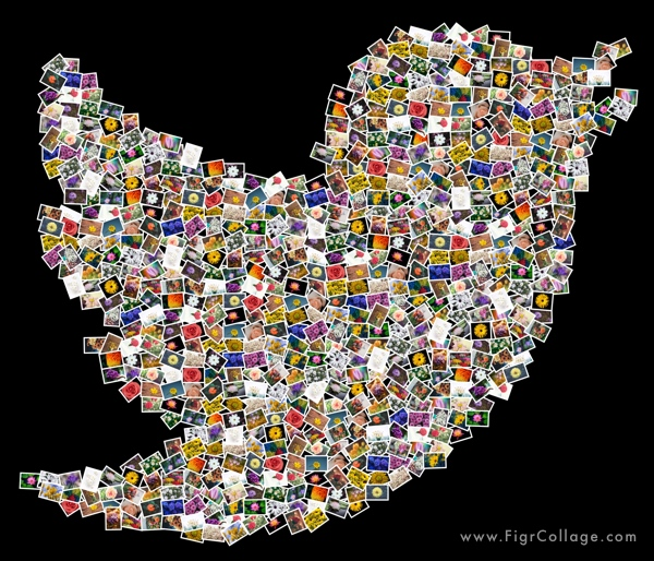 Photo collage of Twitter bird shape