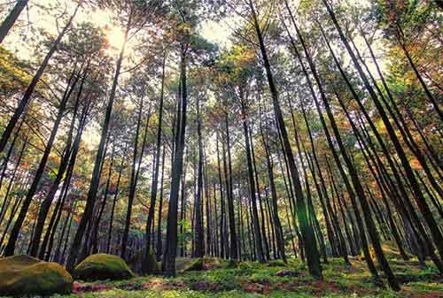 Wisata Bogor - 7 Gunung Pancar - Finansialku