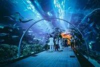 Semua Hal yang Perlu Kamu Tahu Tentang Jakarta Aquarium, Cek Harga Tiketnya! 01 - Finansialku