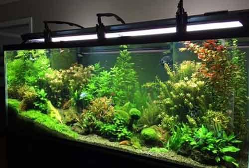 10 Inspirasi Hiasan Aquarium Murah Meriah Yang Buat Orang Tercengang