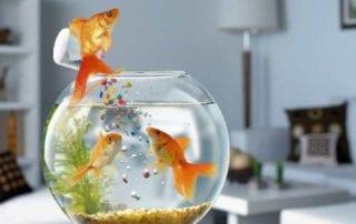 Ikan Hias Air Tawar - Finansialku