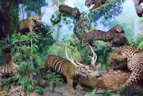 Destinasi Wisata Medan 05 Museum Rahmat International Wild - Finansialku