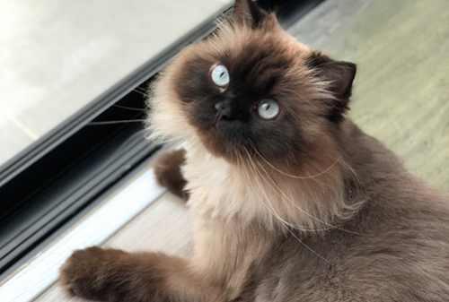 Download 97+  Gambar Kucing Hutang Terbaru Gratis