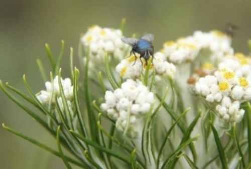Gemar Mendaki Gunung Stop Petik Bunga Edelweis Karena 5 Fakta Ini 00 - Finansialku