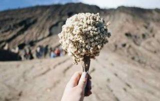 Awas Jangan Dipetik Ini 5 Fakta Unik Bunga Edelweis, Bunga Abadi 02