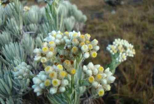 Gemar Mendaki Gunung Stop Petik Bunga Edelweis Karena 5 Fakta Ini 03 - Finansialku