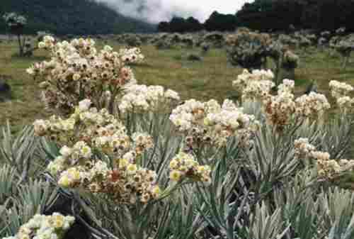 Gemar Mendaki Gunung Stop Petik Bunga Edelweis Karena 5 Fakta Ini 02 - Finansialku