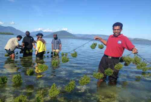10+ Komoditi Pertanian Unggulan Indonesia yang Siap Diekspor 06