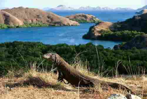 Komodo Island, The Other Side Of Paradise In Flores 06 - Finansialku