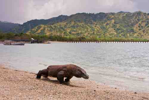 Komodo Island, The Other Side Of Paradise In Flores 01 - Finansialku