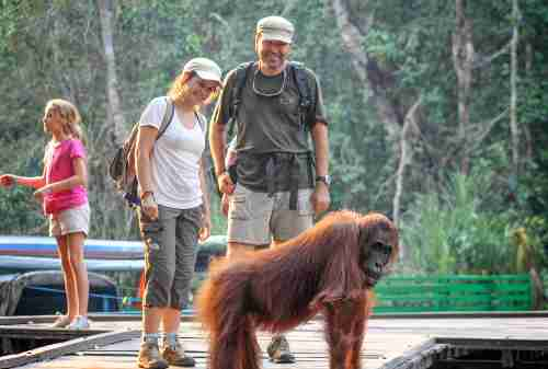 6 Best Activities To Do In The Home Of The Largest Orangutan Population On Earth, Tanjung Puting 06 - Finansialku