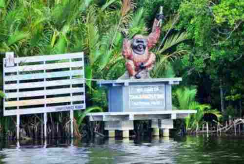 6 Best Activities To Do In The Home Of The Largest Orangutan Population On Earth, Tanjung Puting 01 - Finansialku