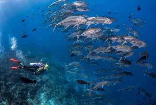 Amazing 8 Attractions To Visit In Divers' Paradise, Wakatobi Island 08 Wakatobi National Park - Finansialku