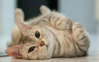 Suka Anabul Gabung Aja ke Komunitas Pecinta Kucing Ini! 01 - Finansialku
