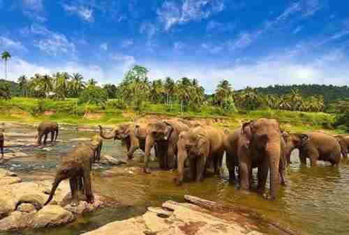 Way Kambas National Park, Home for Endangered Species of Sumatra 01 - Finansialku