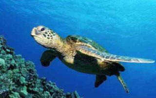 Fakta Unik Tentang Penyu, Reptil Imut di Lautan yang Hampir Punah 01 - Finansialku