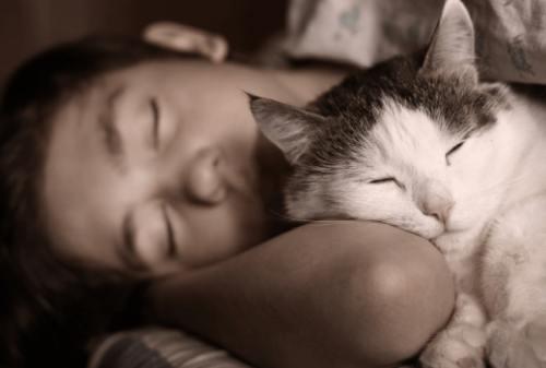 Waspada 4 Risiko yang Mengintai Saat Kamu Tidur Bareng Kucing 01