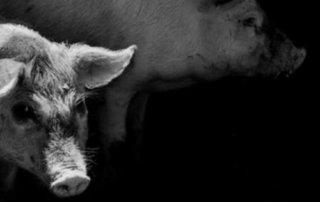 Bekerja Cerdaslah Sampai Tetanggamu Sirik dan Nuduh Piara Babi Ngepet 01