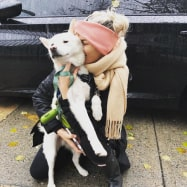 Lost Shiba Inu from Brooklyn, NY was reunited with their owner through FindShadow App