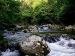 テンカラの~とvol3 某河川サムネイル