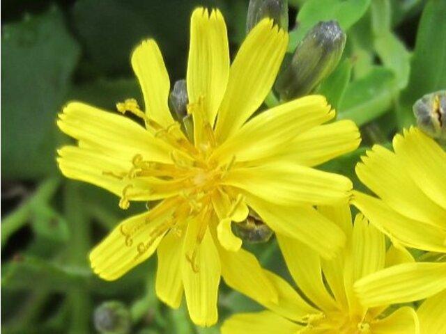10月的黄色花