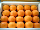 Natsudaidai orange
